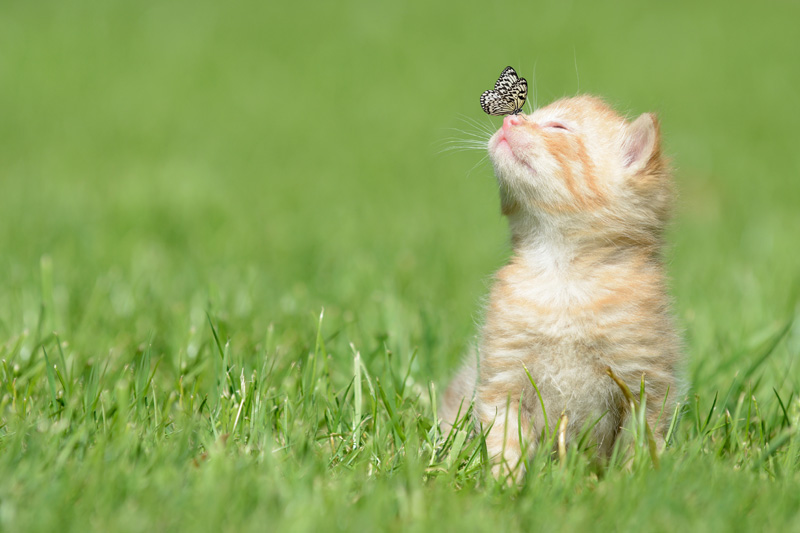 Butterly landing on kitten nose photo